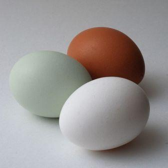 Keeping a backyard flock of chickens is a great source of fresh eggs